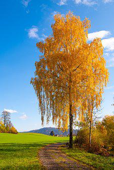 Autumn, Cute, Sky, Nature, Fall Color, Landscape