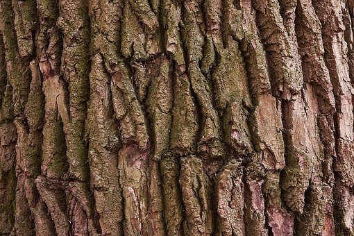 Tree, Bark, Nature, Wood, Forest, Structure, Texture