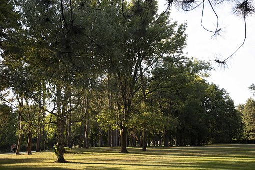 Park, Nature, Nopeople, Tree, Grass, Wood