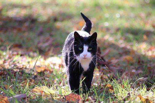 Cat, Pets, Autumn Leaves, Grass, Feline, Portrait