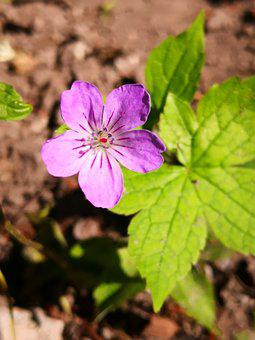 Purple Flower, Modest, Pure, Nature, Simplicity
