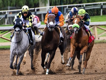 Horses, Racing, Race, Horse, Animal, Equine, Riding