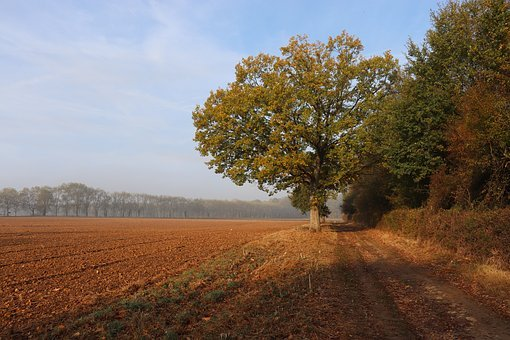Field, Landscape, Fall Colors, Trees, Nature, Rural