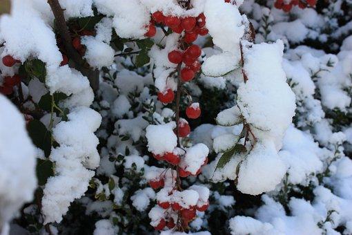 Christmas, Red, Berry Red, Snow, December, Season