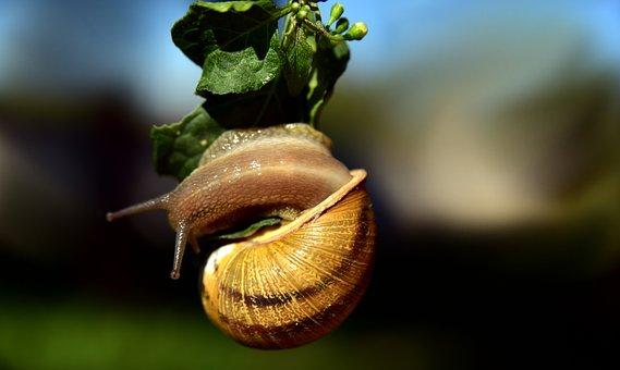 Snail, Hanging, Mollusk, Shellfish, Shell, Swirl, Turn