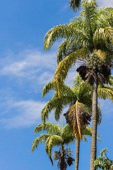 Sky, Palm Trees, Blue, Blue Sky, Nature, Sol, Sunny