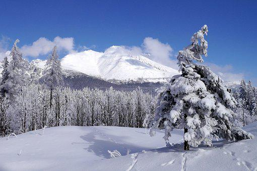 Winter, Snow, Trees, Nature, Forest, Tatry, Slovakia
