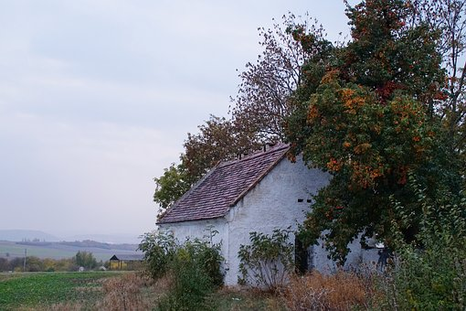 House, Stone, Old, Field, Pear, Tree, Gloomy, Clouds