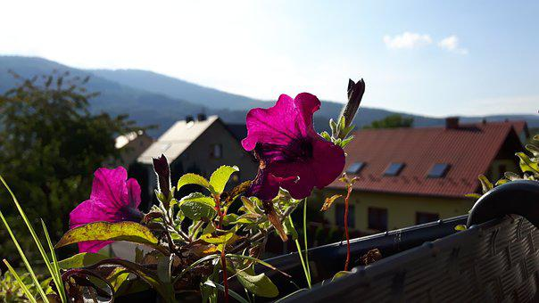 Holidays, Summer, Flowers, Balcony, Landscape, Holiday