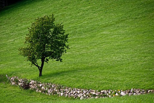 Tree, Nature, Landscape, Quiet, Green, Atmosphere