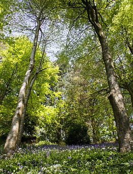 Woods, Trees, Green