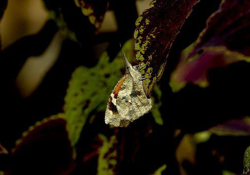 Moth, Unusual, Insect, Wildlife, Garden, Wings, Shape