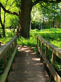 Bridge, Crossing, Tree, Wood, Green, Nature, Simplicity