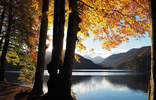 Fall, Lake, Tree, Yellow, Nature, Forest, Mountains