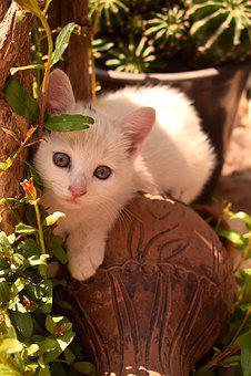 Cat, Young, Kitten, Pet, Animal, Cute, Fur, Sweet