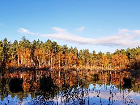 England, Autumn, Lake, Mere, Pine Forest, Reflection