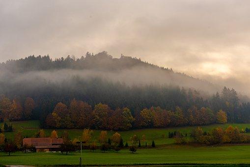 Haze, Fog, Autumn, Landscape, Nature, Trees, Forest