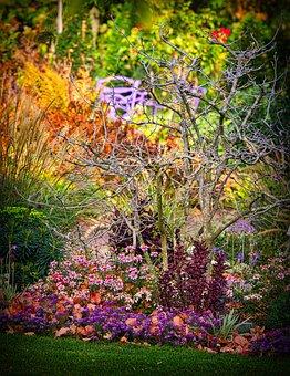 Garden, Autumn, Still Life, Perennials, Bed