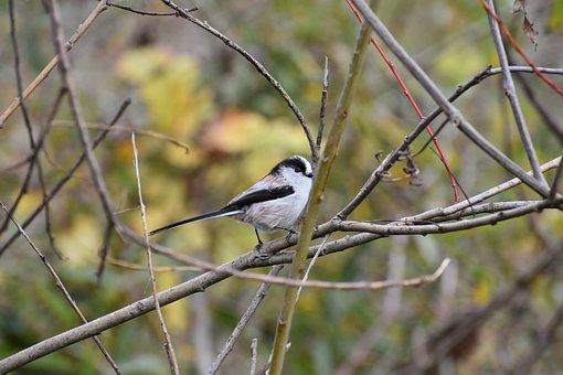 Animal, Wood, Branch, Bird, Wild Birds