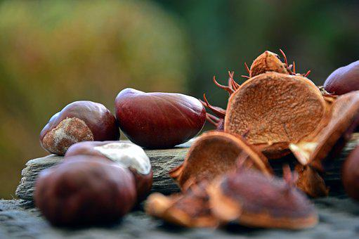 Chestnut, Fruits, Chestnut Fruit, Buckeye, Shells, Spur