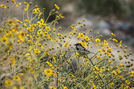 Bird, Bush, Nature, Garden, Cute, Animal, Wildlife