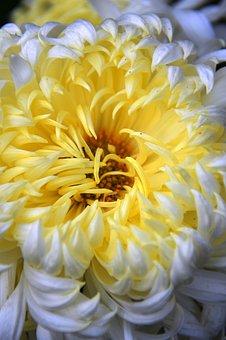 Flower, Sárága Petals, Autumn, Mood, Nature, Color