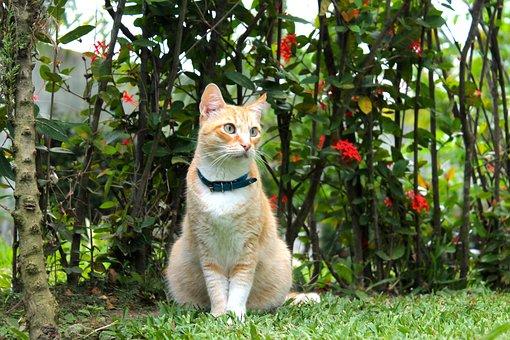 Cat, Plants, Green, Nature, Pet, Cute, Feline, Kitty