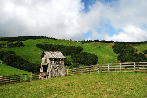 Daegwallyeong, Sky, Nature, Cattle Ranch