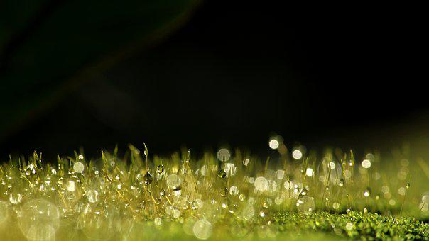 Moss, Dew, Green, Nature, Wallpaper, Plant, Drop, Wet