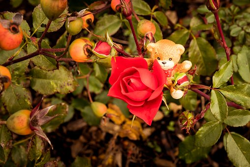 Bear, Toy, Rose, Porcelain, Fall, Bow, Happy, Smiling