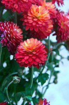 Autumn, őszí Flower, Syrian Muslims, Flora, Color, Nice