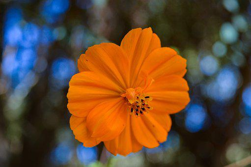 Flower, Yellow, Nature, Plant, Summer, Flora, Petals