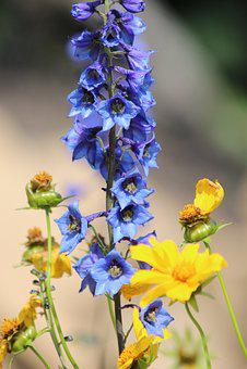 Bell, Blue Flower, Flower, Delphinium, Blue, Yellow
