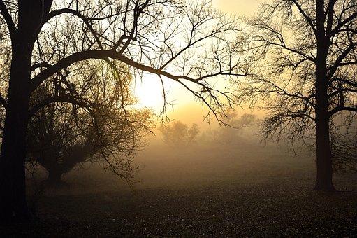 Fog, Sunrise, Morgenstimmung, Weather, Hazy, Slurry