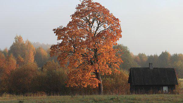Autumn, Landscape, Nature, Tree, Mystical, Fog