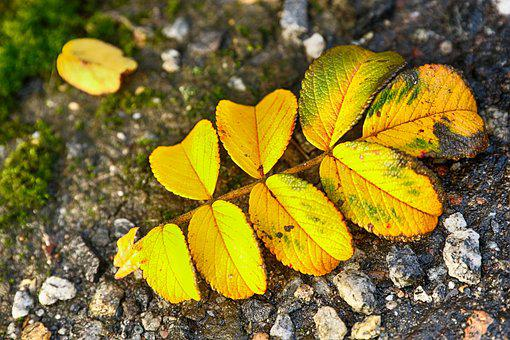 Leaf, Yellow, Autumn, Fall, Ground, Nature