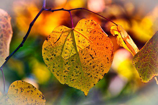Autumn Leaves, Mood, Fall Color, Bright, Atmospheric