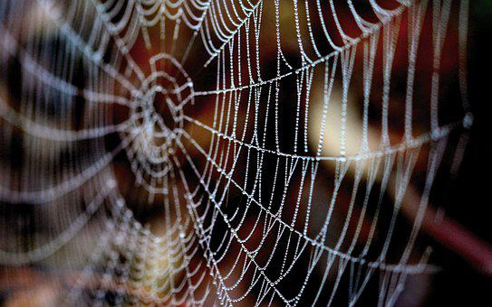 Cobweb, Dewdrop, Web, Nature, Autumn, Morgentau, Beaded