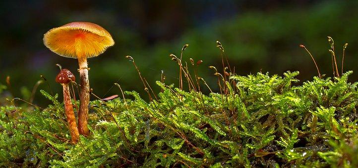 Mushroom, Moss, Autumn, Forest, Mini Mushroom