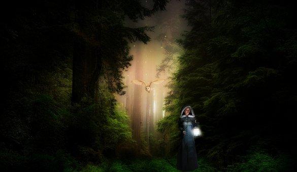Fantasy, Forest, Light, Trees, Mysterious, Fairytale