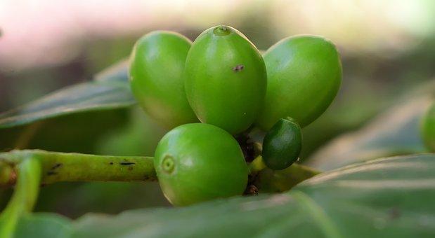 Cafe De Colombia, Nature, Cultivation