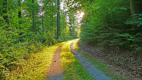 Nature, Landscape, Forest, Forest Path, Trees, Grass