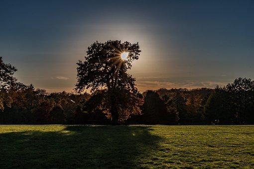 Autumn, Hamburg, Park, Tree, Color, Nature, Landscape