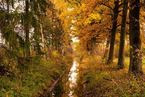 Autumn, Bach, Forest, Nature, Landscape, Water, Trees