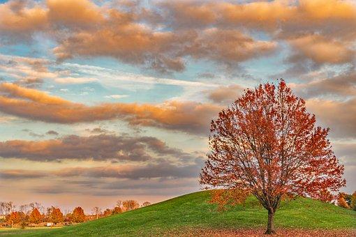 Red, Orange, Sky, Sunset, Nature, Trees, Twilight