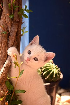 Cat, Playful, Pet, Kitten, Cute, Animal, Fur, Sweet