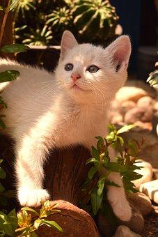 Cat, Kitten, Pet, Animal, Cute, Young, Kitty, Pets