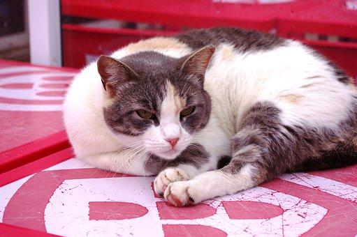 Cat, Concerns, Red, Pet, Animal, Domestic Cat, Portrait