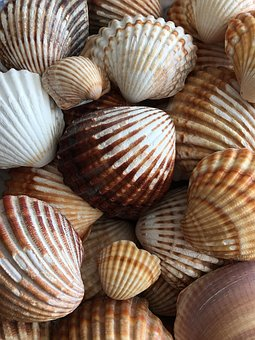 Snails, Sea, Seashell, Spain, Healing, Nature