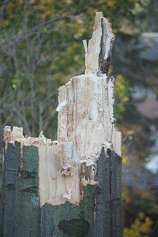 Wood, Fungus, Rot, Broken, Nature, Tree, Strain, Bark
